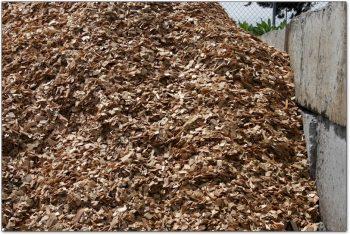 Cedar Chips Bark